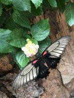 Augsburg: Botanischer Garten
