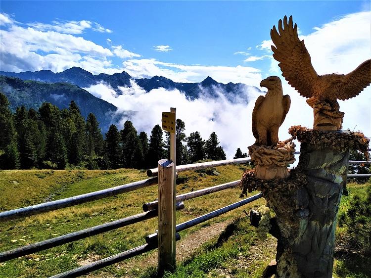 Weitblick: Zirbenholzadler auf der Kalbenalm