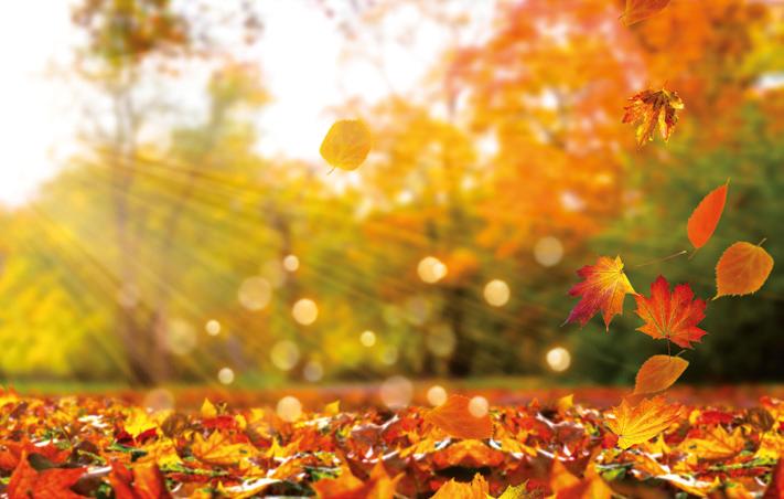 Herbst_AdobeSTock_winyu