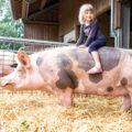 Ein Mädchen reitet auf einem Schwein