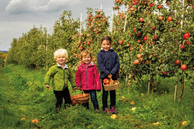 Drei Kinder in einem Obstgarten