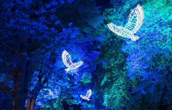 Lichter in Form von weißen Tauben unter blau beleuchteten Ästen