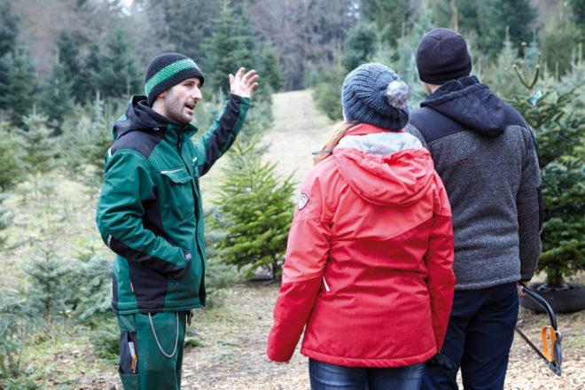 Mitarbeiter von Zingaschusters Christbaumkultur zeigt Kunden die Tannenbäume