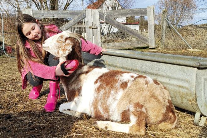 Mädchen streichelt eine Ziege