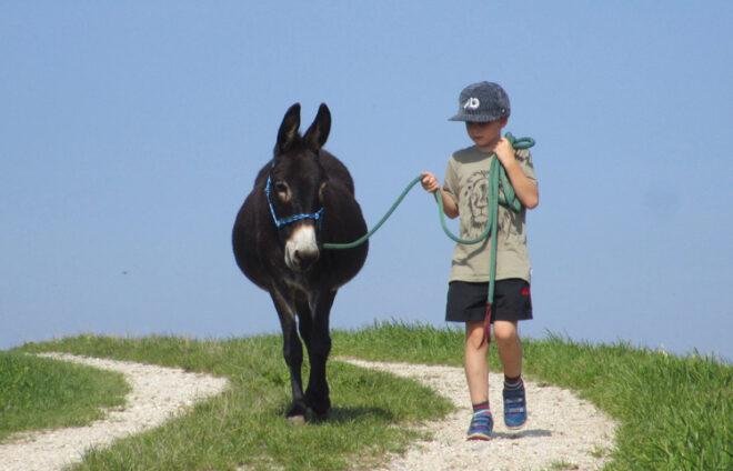 Junge mit Esel