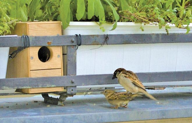 Nistbox und zwei Vögel