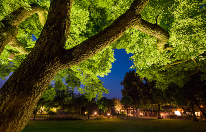 Beleuchteter Baum im Botanischen Garten