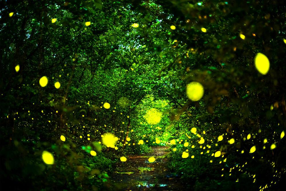 sommernacht glühwürmchen licht