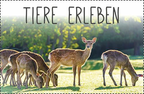 Tier- und Wildparks u.v.m.