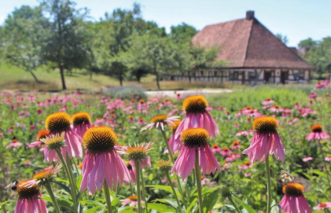 Blumenfeld vor Freilandmuseum