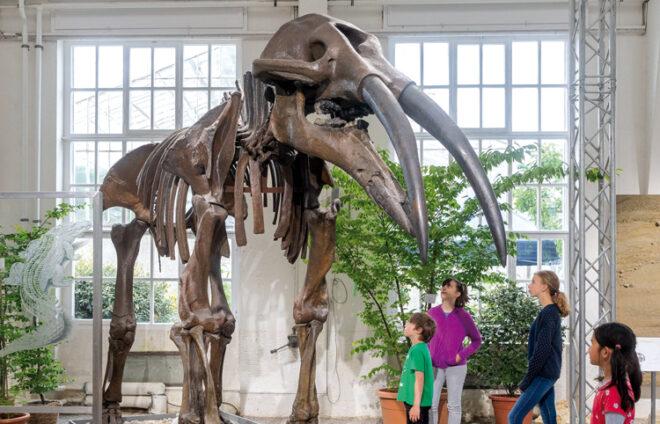 Skelett eines Mammuts in Molassic Park